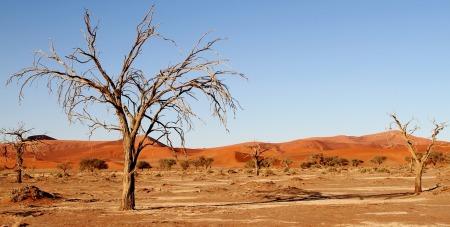 desert-1305049_1280