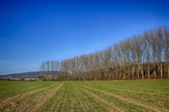 field-2787294_1280